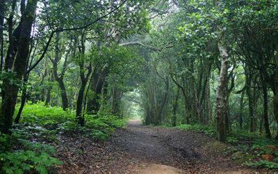 Isole Canarie – Immergersi nelle foreste preistoriche