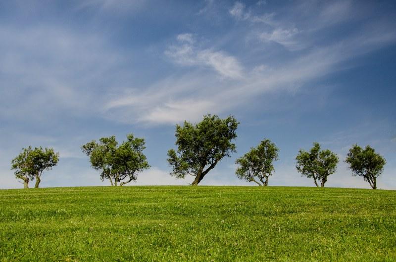 Ridurre il CO2: dieci consigli per aiutare il pianeta